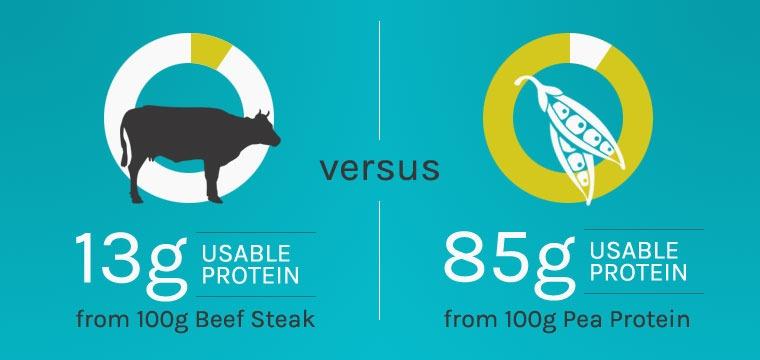 Plant protein versus animal protein