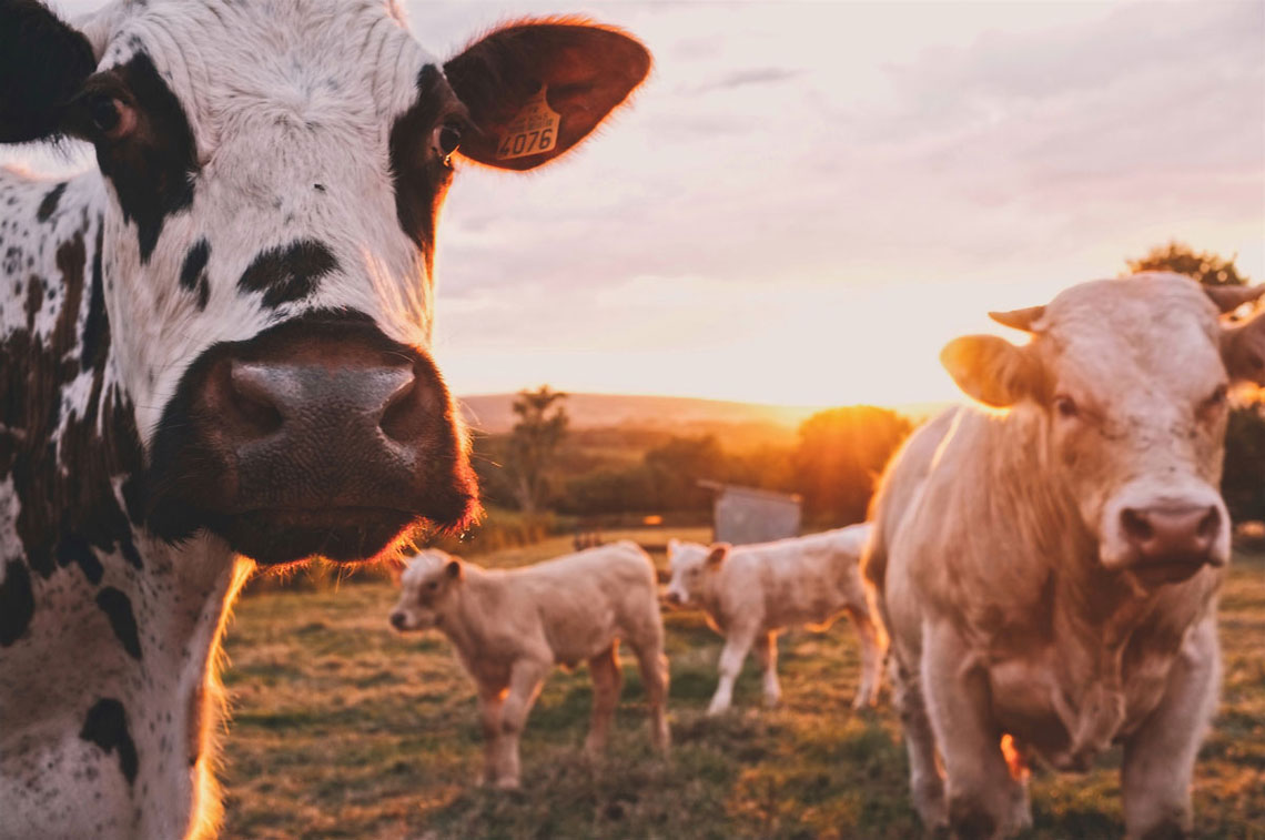 Livestock_farming_is_a_costly_affair_PhytoPro